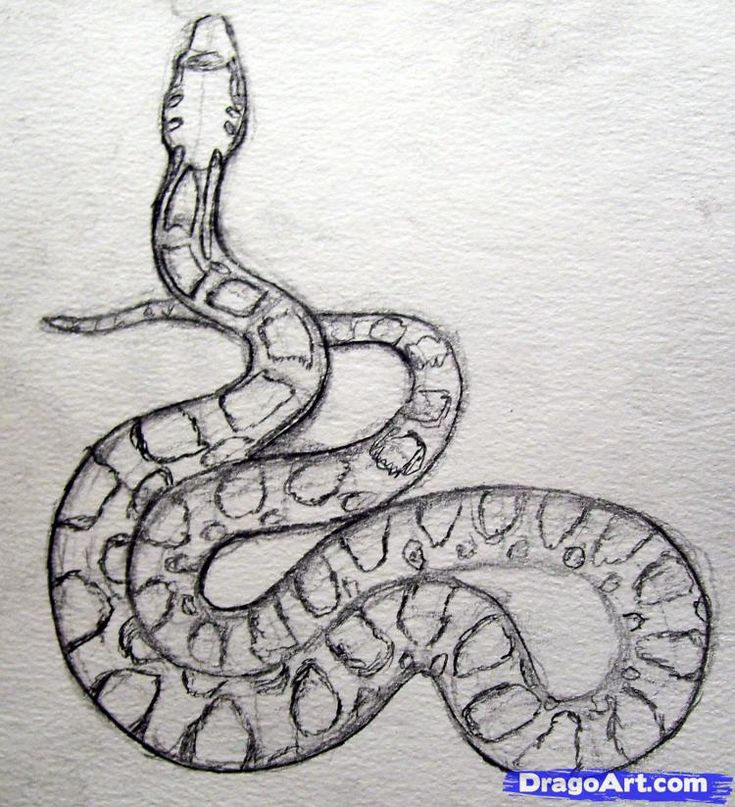 how to draw a snake -