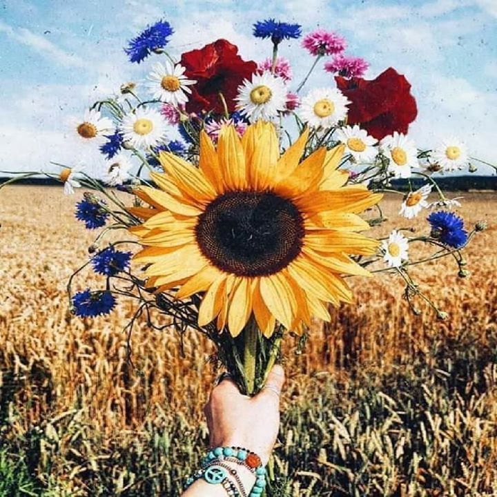 تستهويني جدا مقولة علي بن أبي طالب كل متوقع آت منتظر الفرح سيحصل عليه وصاحب اليقين ستتحقق فكرته مسيء الظن سينال Flowers Flowers Photography Pretty Flowers