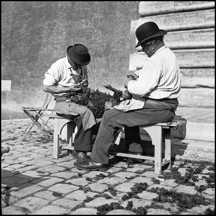 Toiletteurs de chiens. 1900, Paris.