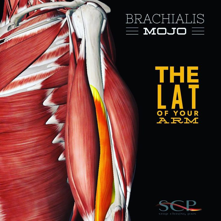 7 best Brachialis images on Pinterest | Massage, Massage therapy and ...