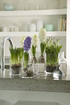 Verschillende bloembollen bij elkaar op het werkblad. Combineer witte druifjes eens met hyacinten. Beide bloemen geuren heerlijk waardoor je de lente binnen al ruikt! Bloemen Bureau Holland