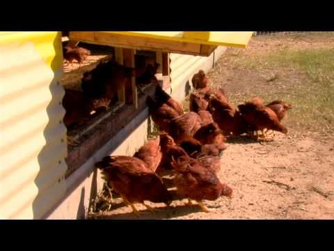 Carole Morison Industrial Chicken Farmer From Food Inc Switches