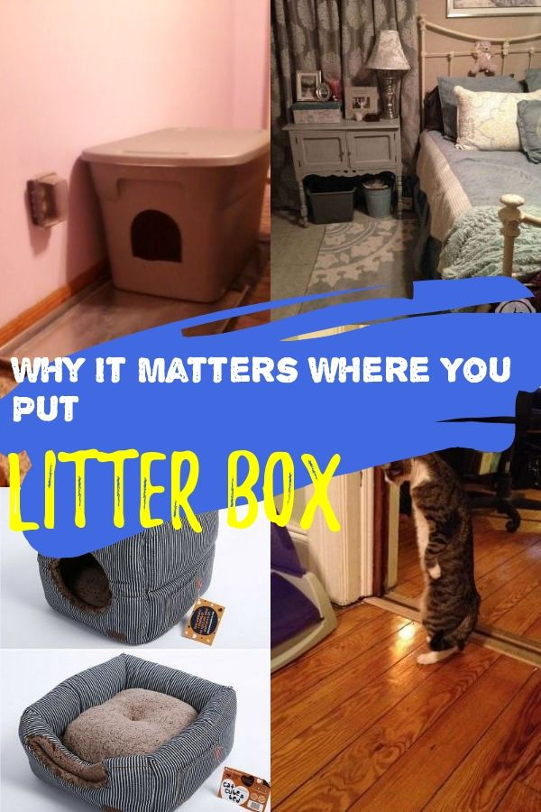 How To Teach Your Cat Use Litter Box In 2020 With Images Best
