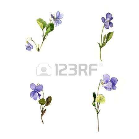 dessin de fleurs sauvages bleu des plantes de violettes des herbes sauvages  peintes illustration bot Banque