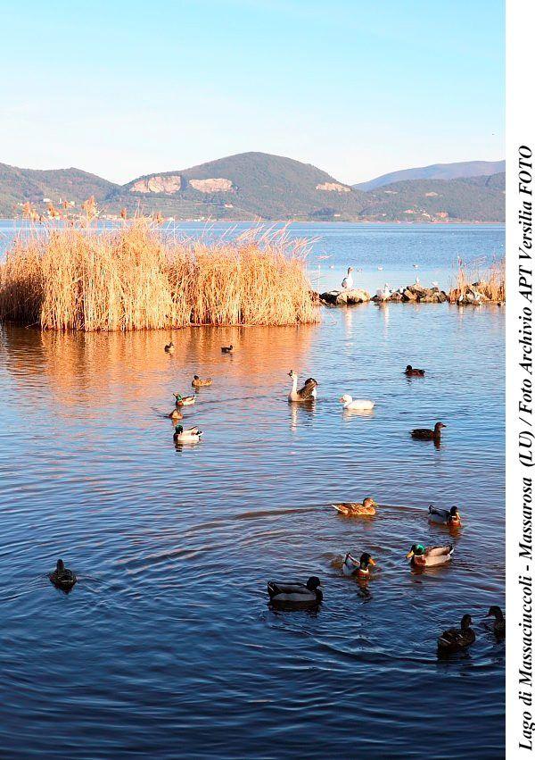 Lago di Massaciuccoli - Massarosa  (LU) / Foto Archivio APT Versilia