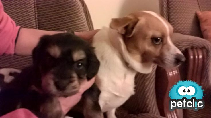 La familia crece. #perros #cachorros www.petclic.es