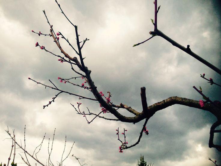 Tempesta di primavera