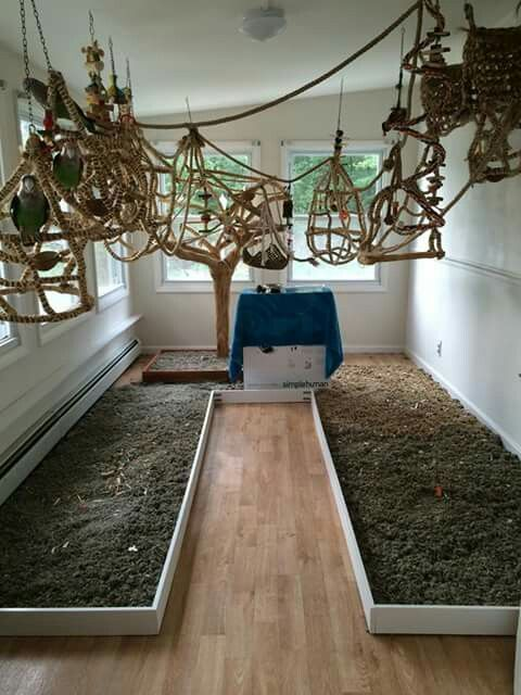 Want a bird room in your house? Making one is easier than you think.  DIY pet bird room ideas you'll have fun making for your pet parrot, cockatiel, cocatoo, mackaw or other large bird. Heck even parakeets would love a bird playground like this!  Busy birds are happy birds!