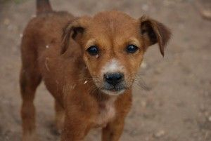 Please sign!! Put an End to Roadside Pet Sales