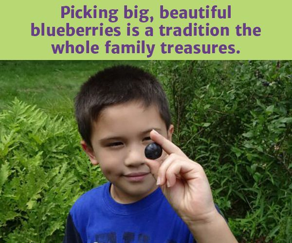 The joys of blueberry picking! {blog} Plus some yummy, healthy recipes for all those berries