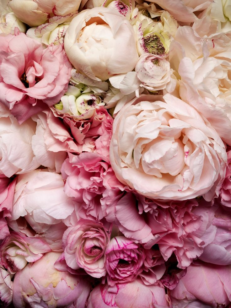 : Pink Flower, Shades, Wedding Bouquets, Color, Beautiful, Blushes, Pink Rose, Wedding Flower, Pink Peonies