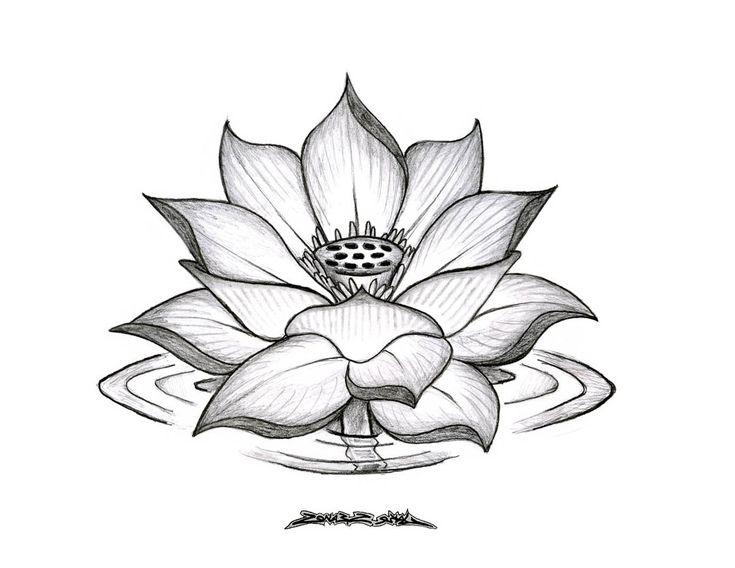 Lotus Flower Drawings for Tattoos | Lotus Flower Drawing ...