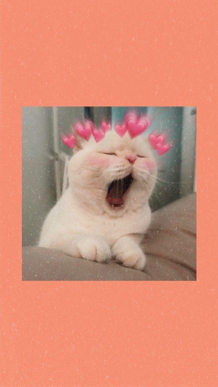 cat gambar hewan lucu bayi kucing anak kucing