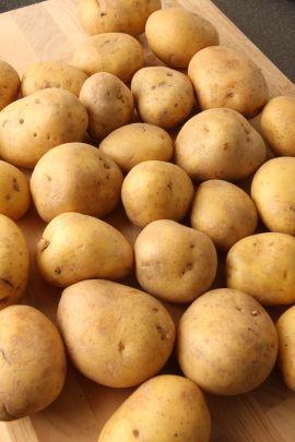 Bei allen Kartoffel-Sorten lohnt sich das Vorkeimen, denn vorgekeimte #Kartoffeln wachsen bei kühlen Witterungen weiter. Bis zu 14 Tage lässt sich die #Ernte der Kartoffeln durch Vorkeimen vorverlegen und der Ertrag kann bis zu 20 Prozent höher sein.