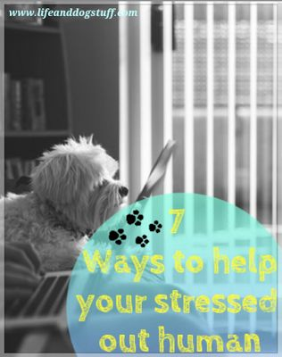 7 Ways To Help Your Stressed Out Human at Life and Dog stuff blog!