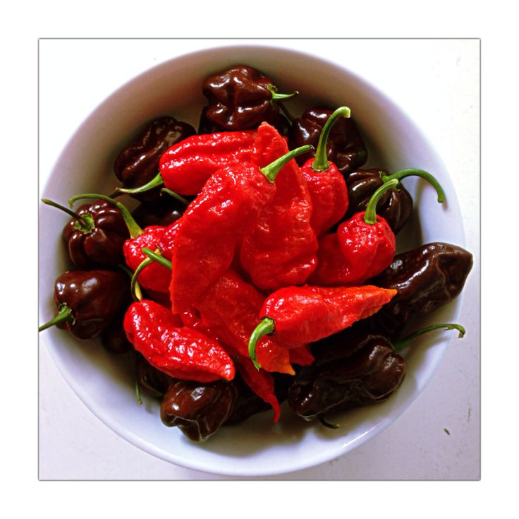 173 best images about peperoncini piccanti hot chili on for Giant chilli thai