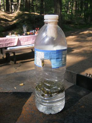 """Make a simple wasp trap...The """"meat bees"""" (like yellow jackets) were terrible on our last camping trip, but the site hosts taught us this cool trick... a bee trap:  Water bottle with a hole in the side, meat hung in the top, water in the bottom.  We caught nearly 1000 bees over the 3 days, and that is no exaggeration.  www.anona-mom.blogspot.com"""