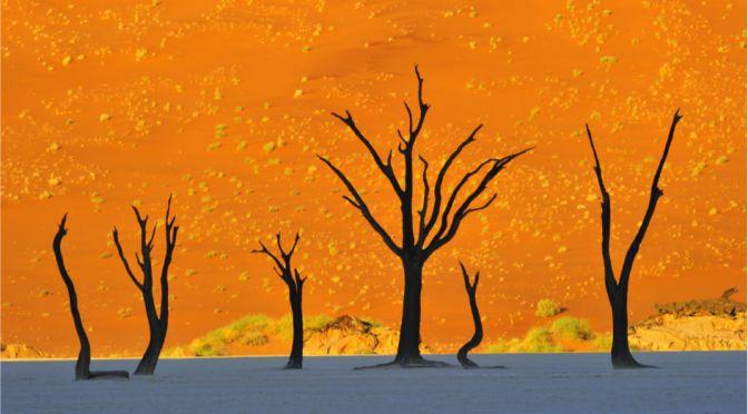 【世界の絶景】まるで絵本の世界。アフリカ「ナミブ砂漠」があまりに異次元