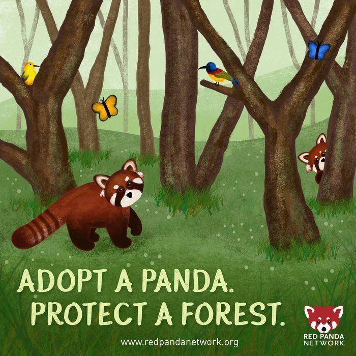 Assez 14 best Adopt a Red Panda! images on Pinterest | Red pandas  EX76
