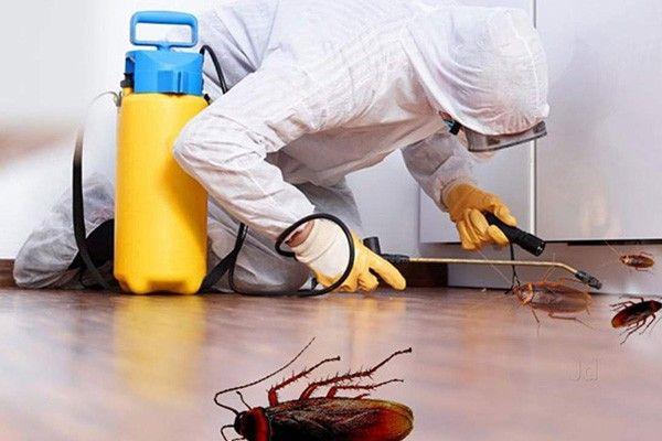 Bed Bug Exterminator Cost Newark Nj In 2020 Bed Bug Extermination Bed Bugs Bug Exterminator