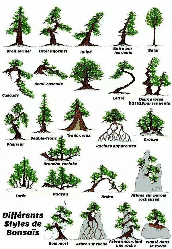 Differents Styles De Bonsais Indoor Bonsai Tree Bonsai Tree Types Bonsai Tree