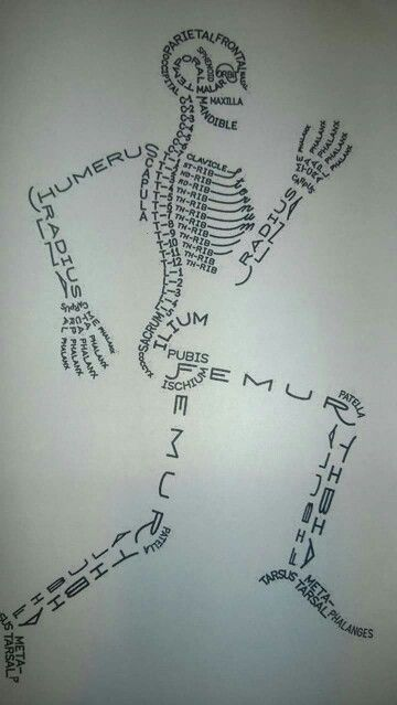 Names of the bones in the human body