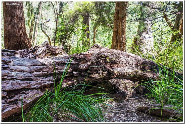 Esperance to Perth – Forest Areas