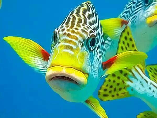 Beautiful salt water fish