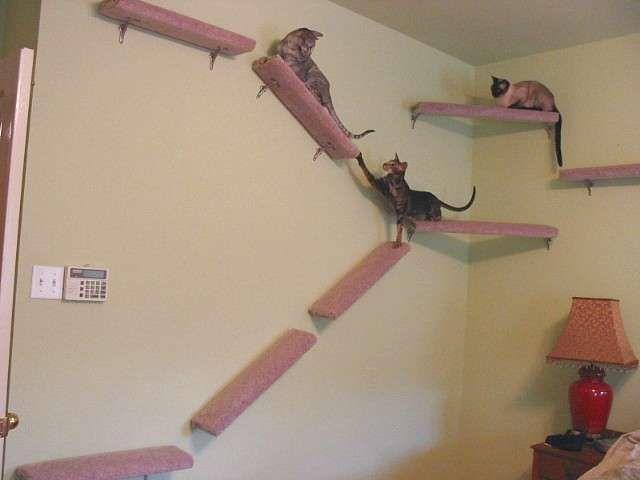 Tiragraffi per il gatto - Mensole tiragraffi