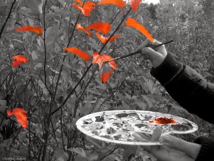 чёрно-белые фото с цветными элементами