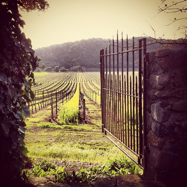 """""""Stags' Leap Winery was pretty effing spectacular today. #napa #wine"""""""