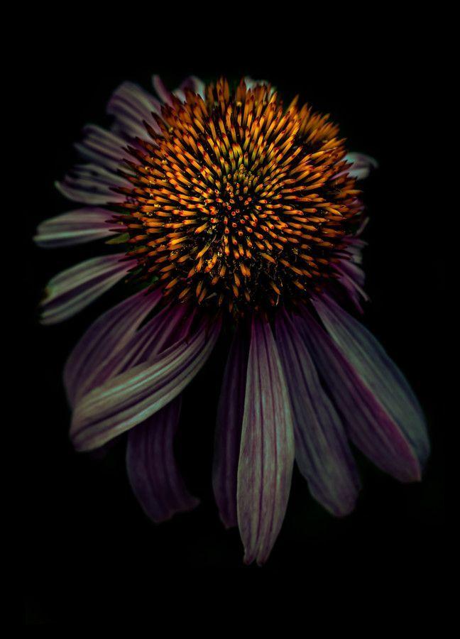 Nero |  Black |  Dark | Noire | Flower | Photography | Nature