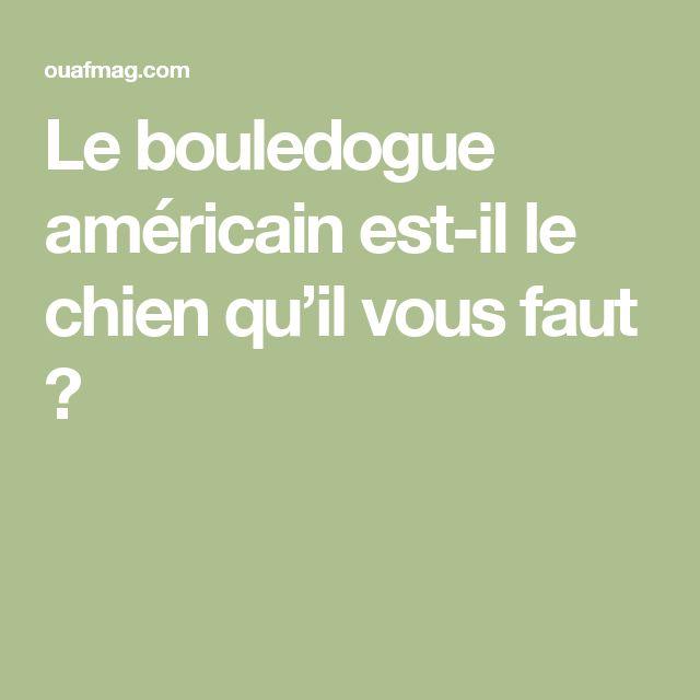 Le bouledogue américain est-il le chien qu'il vous faut ?