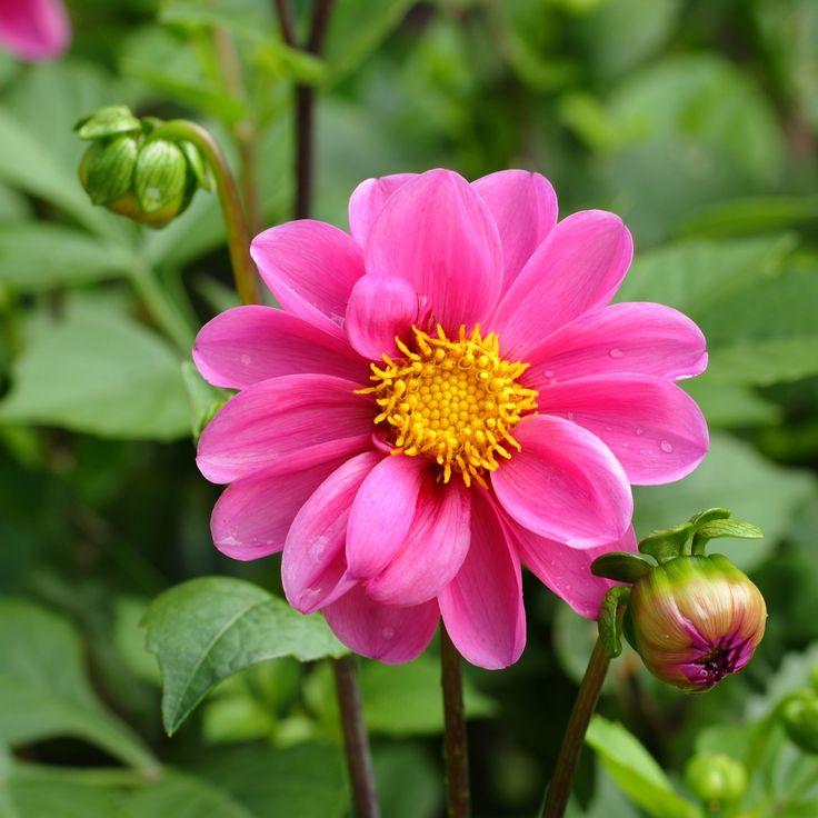 Flower Wallpaper New - Share Online