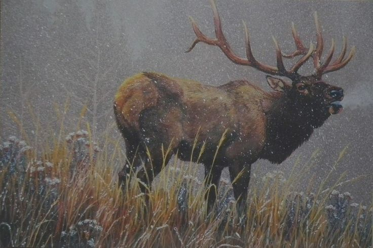 196 Best Images About Art - Elk On Pinterest