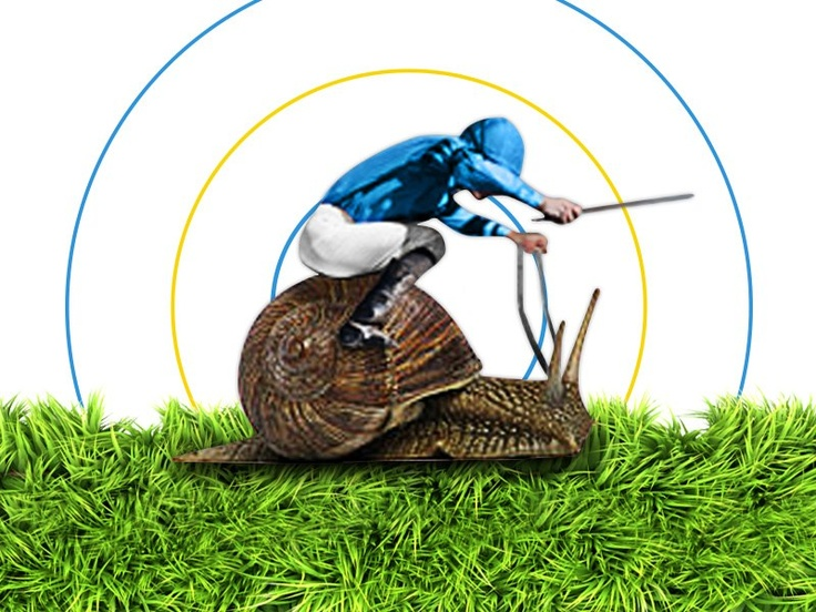 Novelty betting - Like the Melbourne Cup, we're paying 4 places on Snail Racing! - Sportsbet.com.au