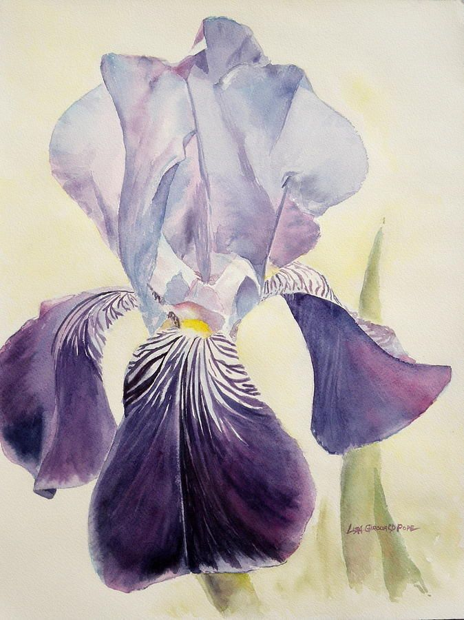 17 Best Ideas About Purple Iris On Pinterest Iris Flowers Iris Flower Photos And Irises Iris Painting Iris Art Watercolor Flowers Paintings