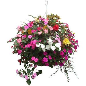 Little Green Blog » 5 ways to save water with hanging baskets