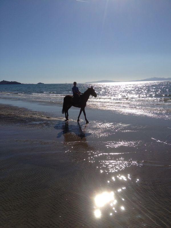 Cavalli a Punta Ala !!