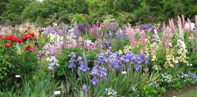 These gardens at Schreiner Iris Farm can serve as a cutting garden and a butterfly garden!