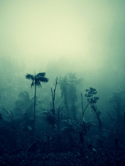 This picture has a nice cool, mysterious tone to it. The mist in the jungle just makes it all the better.