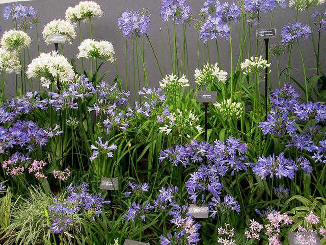 British Secrets To Great Flower Gardens Gardens Florida