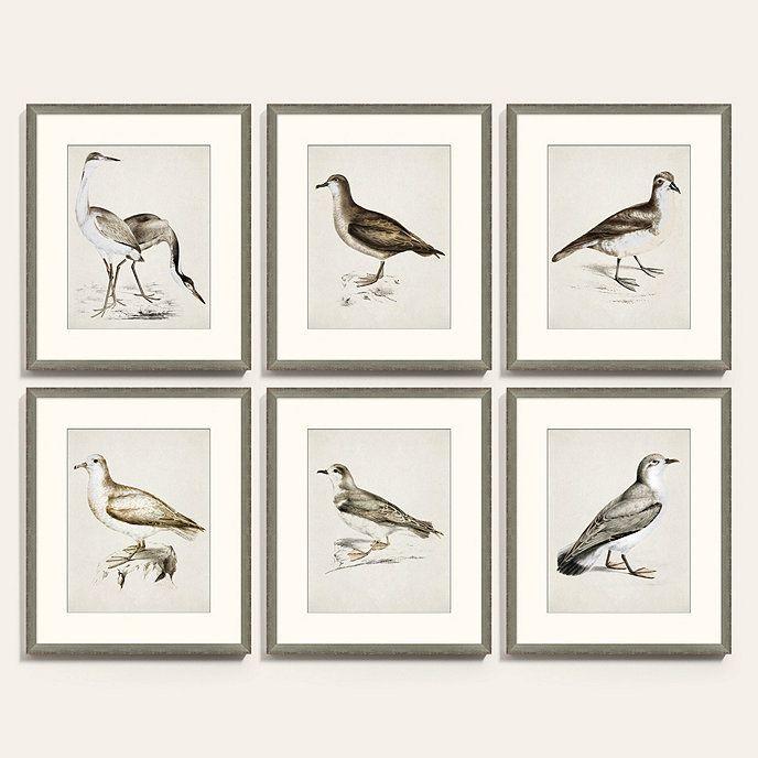 Coastal Bird Print Art Coastal Birds Bird Art Print Bird Prints