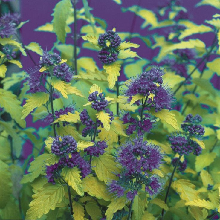 Find Shrubs With Different Bloom Times That Can Provide