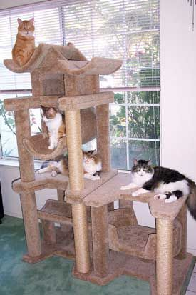 More cat furniture, cat tree, cat house, cat scratching tree, cat scratch post, and cat play pictures