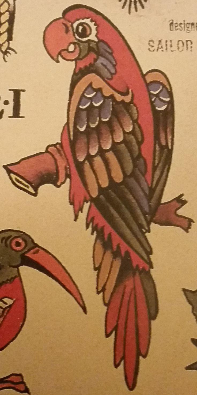 Traditional/old school tattoo, sailor jerry, parrot, bird