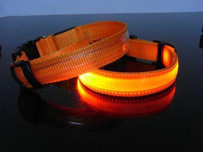 Led Halsband Hond Kleur Oranje