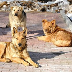 Protect Strays In Olympic Host Cities. Tell the International Olympic Committee (IOC) to stop allowing cruelty to animals.  PLEASE SIGN & SHARE this IMPORTANT PETITION!  PETITION LINK:  http://theanimalrescuesite.greatergood.com/clickToGive/ars/petition/StopOlympicCruelty?&utm_source=ars-blog&utm_medium=ars-article&utm_campaign=olympic-athlete-saves-strays