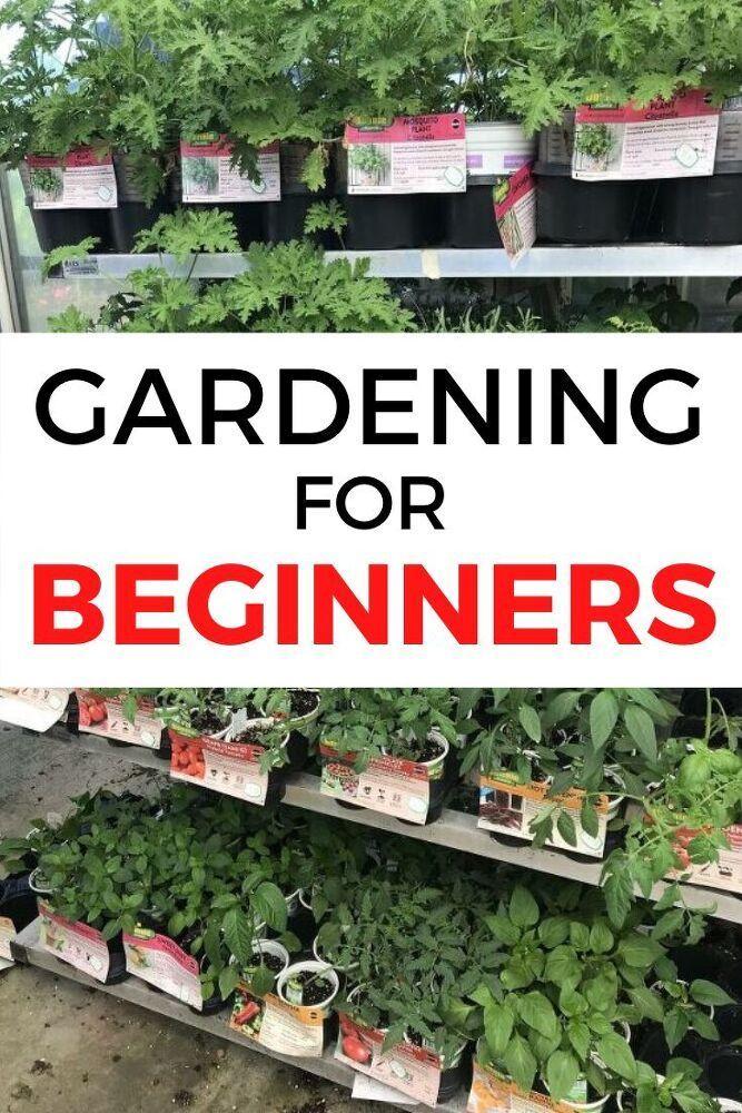 Gardening For Beginners Tips, Tips For Starting A Garden