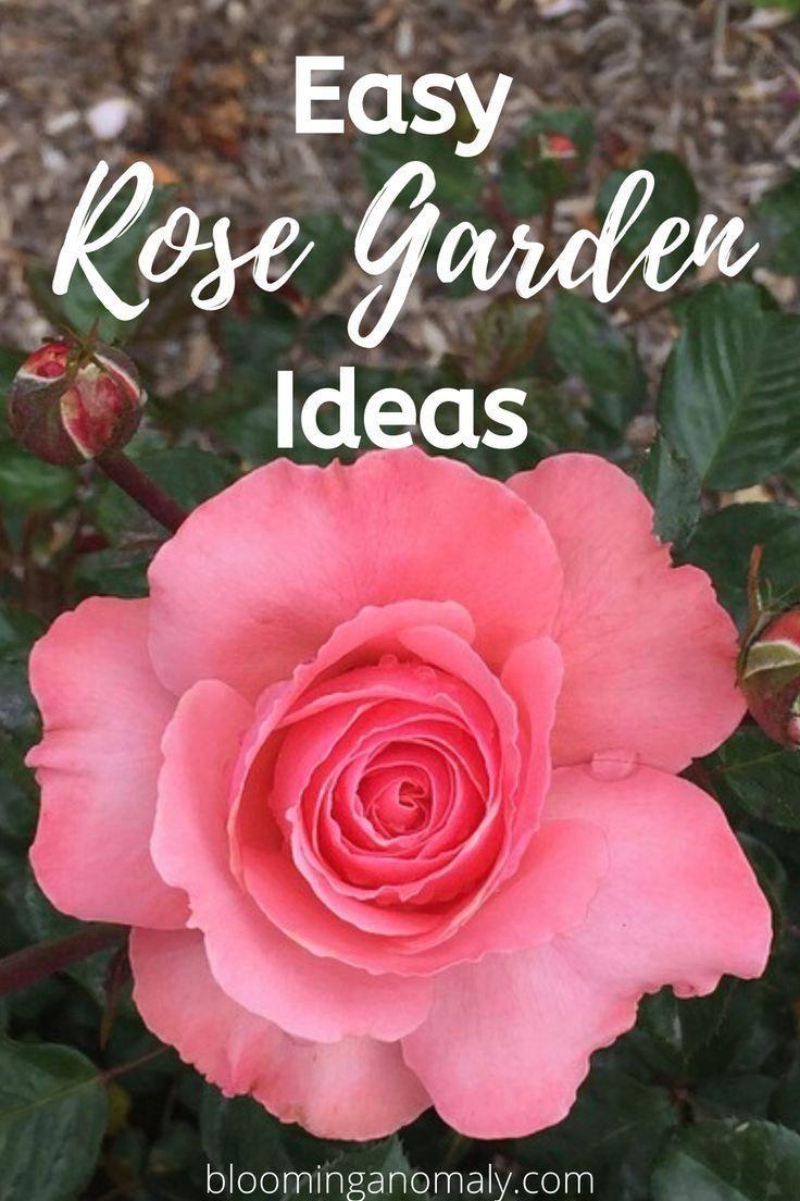 Pin On Rose Garden Landscape